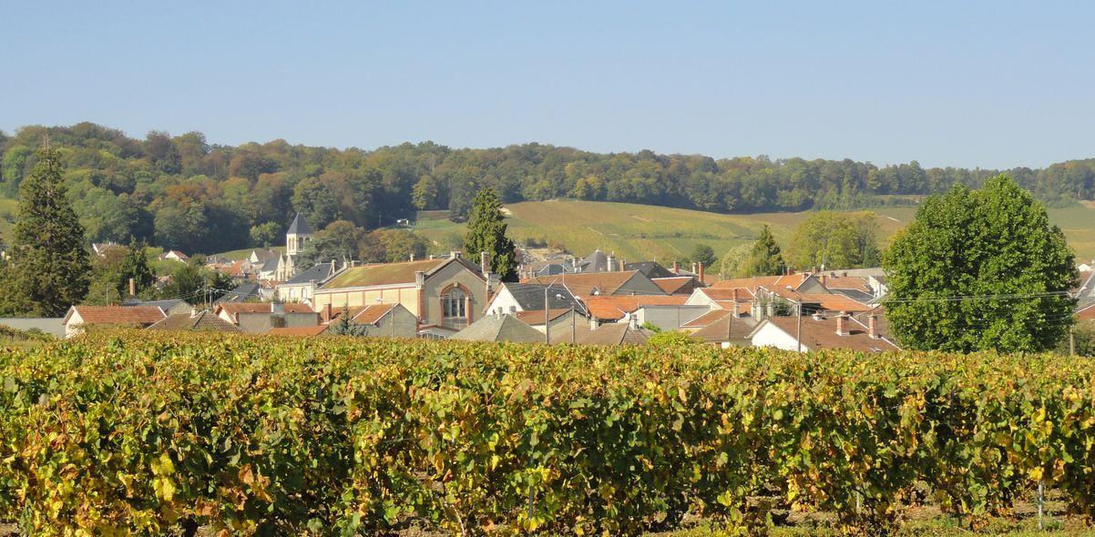 Avize village viticole
